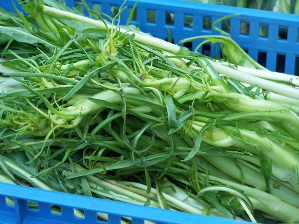more puntarelle