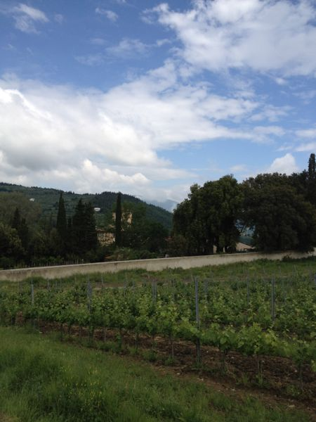 Selvapiana vineyards, DOCG Chianti Rufina
