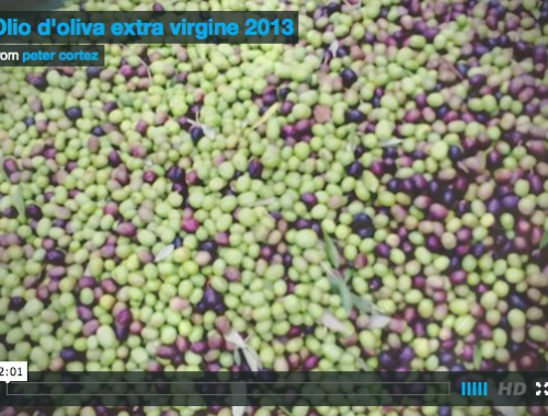 Harvest Olive Oil Video