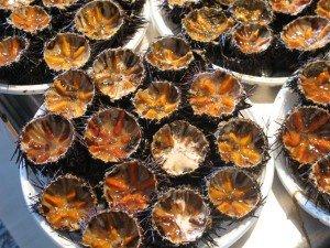 sea urchins ricci di mare