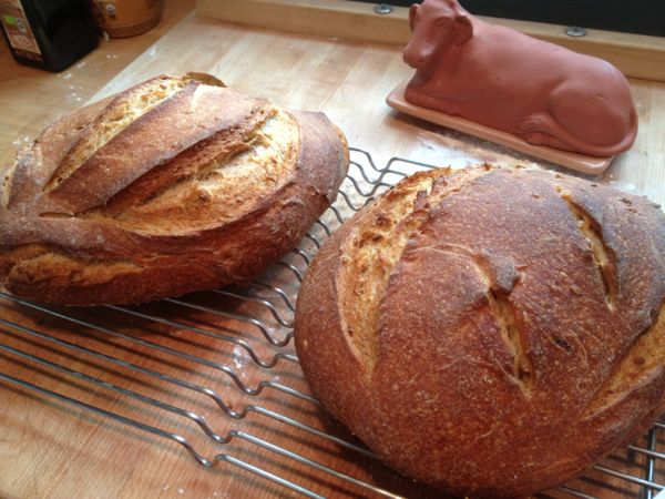 Two loaves: einkorn & all-purpose flour